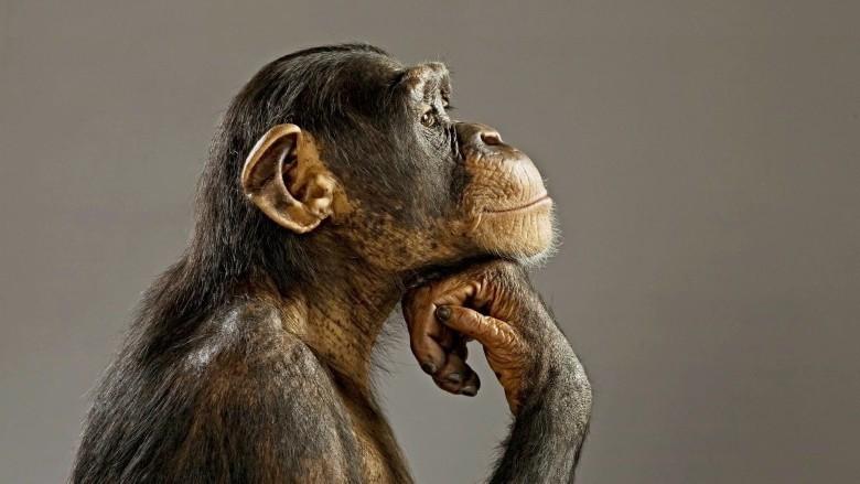 Conférence : Cognition animale; Peut on parler d'intelligence et comment la mesurer ?