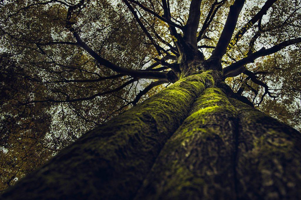 Conférence : la place de l'arbre dans notre quotidien